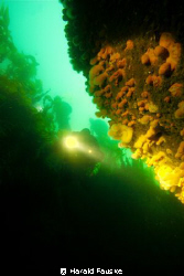 red sponges covering the walls in an underwater canyon by Harald Fauske 